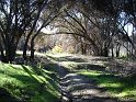 Santa Margarita River trail in Fallbrook beneath canopy of oaks